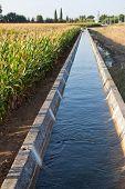 Irrigation Canal On Corn Field