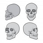 the hand drawn human skulls