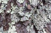 Lichen gray textured background