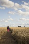foto of stroll  - Lady having a stroll through a cornfield on a windy day - JPG