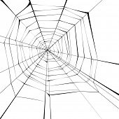 black spider web over white background