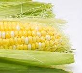stock photo of corn-silk  - Close up row of the fresh cooked corn - JPG