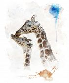 Watercolor Digital Painting Of  Mother And Baby Giraffes