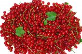 Ripe Red Currant Close-up As Background