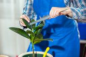 Young Woman looking after houseplant at home