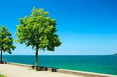 Trees by Lake Constance (Bodensee) at Germany