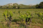 Landscape Of Les Alpilles In Provence