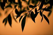 Sharp Leaves Of A Tree On An Orange Background