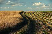 Rhythmic Series Of Cut Grass To The Horizon