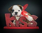 Kiss Me Puppy