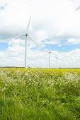 foto of rape-seed  - Group Of Wind Turbines In Field Of Oil Seed Rape - JPG