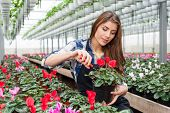 Florist woman working with flowers.