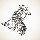 Sketch of hen head, Hand drawn vector illustration