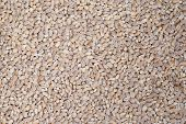 Food Background Of Beige Grain Barley