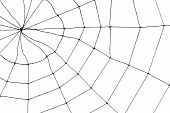 stock photo of spider web  - Spider Web for background use close up - JPG