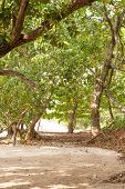 pic of vegetation  - THe tropical sandy beach with beautiful vegetation - JPG