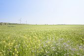 stock photo of generator  - Landscape of green barley field and yellow canola flowers with wind generator in Gapado Island of Jeju Island Korea - JPG