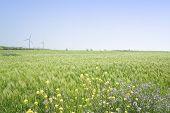 picture of generator  - Landscape of green barley field and yellow canola flowers with wind generator in Gapado Island of Jeju Island Korea - JPG