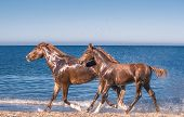stock photo of foal  - The red mare with the red foal on the seaside - JPG