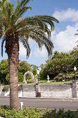 Palms in Bermuda