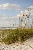 Scenic Beach-Szene