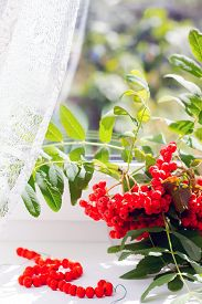 picture of mountain-ash  - Autumn view from the window a branch of a mountain ash in glass vase and rowan beads - JPG